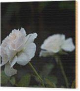 Morden Blush Rose Wood Print