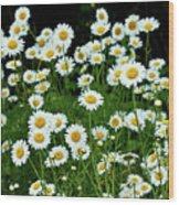More Daisies  Wood Print