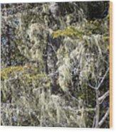 More Hoar On The Cedar Wood Print