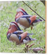 More Mandarin Ducks Wood Print
