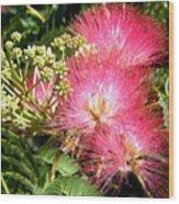 More Mimosa Wood Print