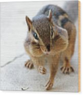 More Nuts Please Wood Print