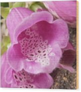 More Pink Bells Wood Print