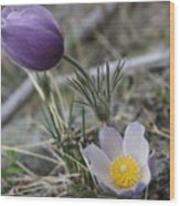 More Purple Flowers Wood Print