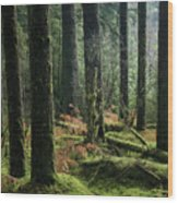 More Tree Trunks And Ferns Wood Print