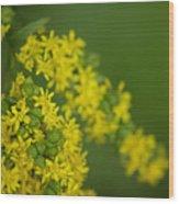 More Yellow Wood Print