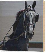 Morgan Horse Wood Print