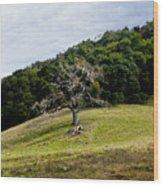 Morgan Territory Oak Wood Print