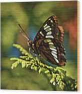 Mormon Metalmark Wood Print