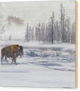 Morning Bison 4  7912-4 Wood Print