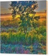 Morning Color-4 Wood Print