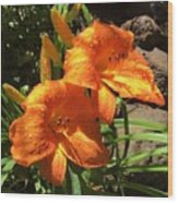 Morning Daylilies Wood Print