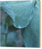 Morning Dew Drops Wood Print