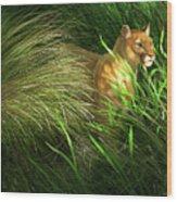 Morning Dew - Florida Panther Wood Print
