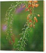 Morning Dew On Orange Flowers Wood Print