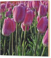 Morning Dew Tulips Wood Print