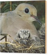 Morning Dove And Two Babys Wood Print