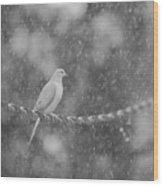Morning Dove In The Rain Wood Print