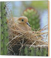 Mourning Dove Nest In A Cactus Wood Print