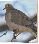 Morning Dove Wood Print by Patricia M Shanahan