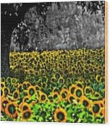 Morning Doves And The Sunflower Field Wood Print
