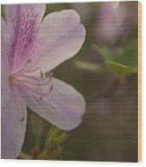 Morning Flower Wood Print