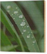 Morning Freshness  Wood Print