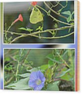 Morning Glories And Butterfly Wood Print