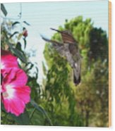 Morning Glories And Humming Bird Wood Print