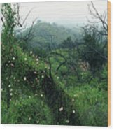 Morning Glories In Fog Wood Print