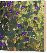 Morning Glories Wood Print by Margie Hurwich