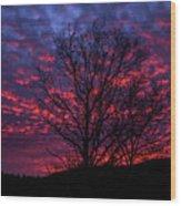 Morning Glory 1 Wood Print