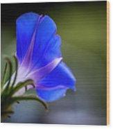 Morning Glory 3500 Wood Print