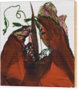Morning Glory Canna Red Wood Print
