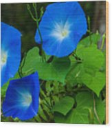 Morning Glory Family Wood Print