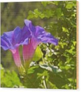 Morning Glory I Wood Print
