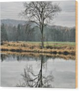 Morning Haze And Reflections Wood Print