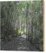 Morning Hike On Waihee Wood Print