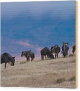 Morning In Ngorongoro Crater Wood Print
