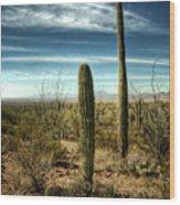 Morning In The Sonoran Desert Wood Print