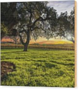 Morning In Wine Country Wood Print