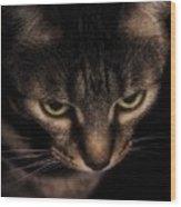 Morning Kitten  Wood Print
