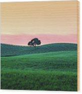 Morning Light And Oak Tree Wood Print