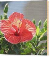 Morning Light Hibiscus Wood Print