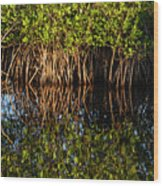 Morning Light Mangrove Reflection Wood Print