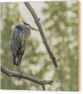Morning Light On Great Blue Heron Wood Print