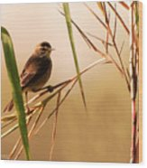 Morning Light Warbler Wood Print