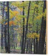 Morning Mist On The Path Wood Print