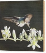 Morning Nectar Flyby  Wood Print