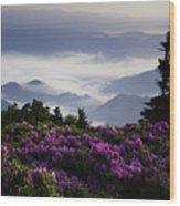 Morning On Grassy Ridge Bald Wood Print by Rob Travis